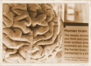 Human Brain / AI